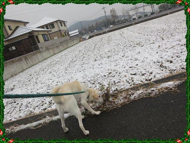 f:id:yasukazu01:20121225081329j:image