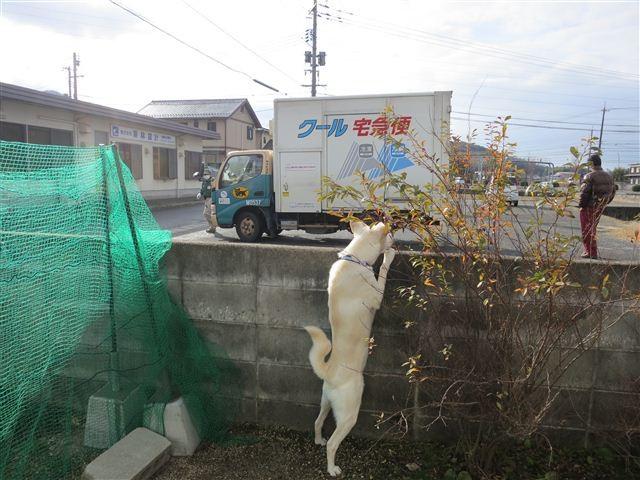 f:id:yasukazu01:20130104100547j:image