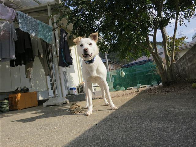 f:id:yasukazu01:20130106124928j:image