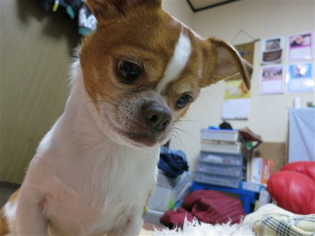 f:id:yasukazu01:20130108192314j:image