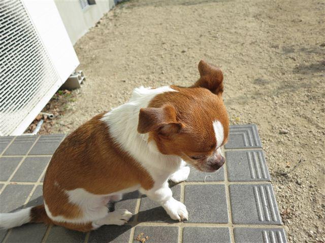 f:id:yasukazu01:20130112110626j:image