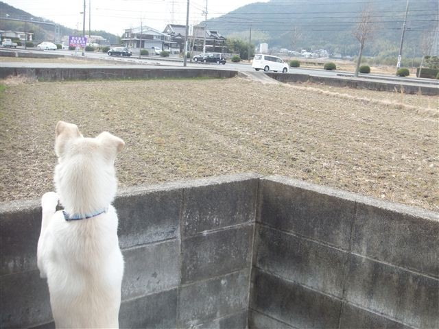 f:id:yasukazu01:20130115121447j:image
