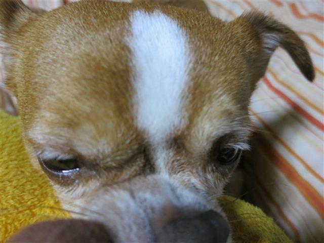 f:id:yasukazu01:20130115224730j:image