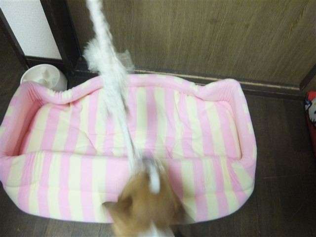 f:id:yasukazu01:20130201181706j:image