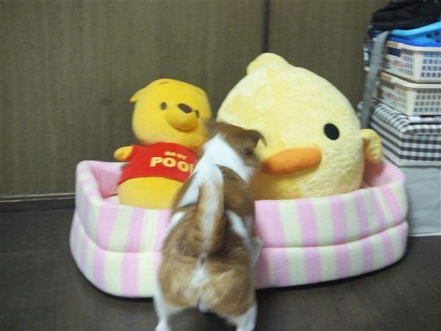 f:id:yasukazu01:20130201220006j:image