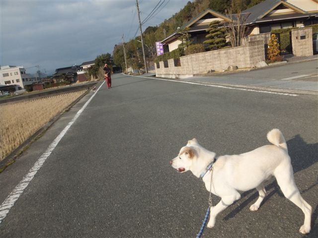 f:id:yasukazu01:20130213162446j:image