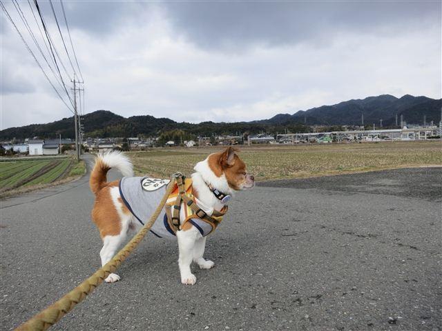 f:id:yasukazu01:20130216101626j:image