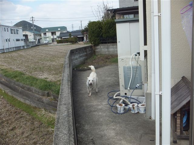 f:id:yasukazu01:20130218205335j:image