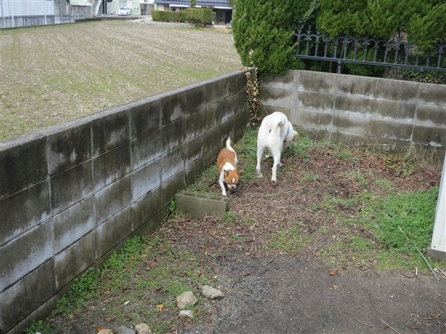 f:id:yasukazu01:20130219122941j:image
