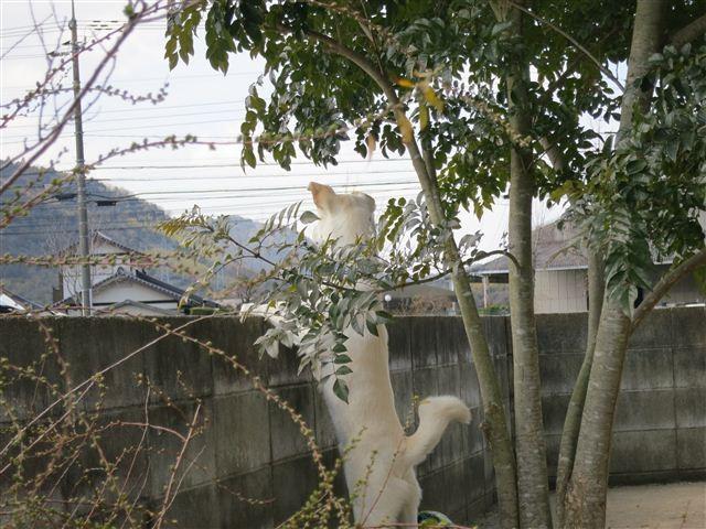 f:id:yasukazu01:20130222120100j:image