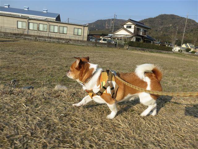 f:id:yasukazu01:20130222162335j:image