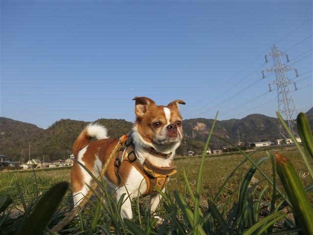 f:id:yasukazu01:20130222162548j:image