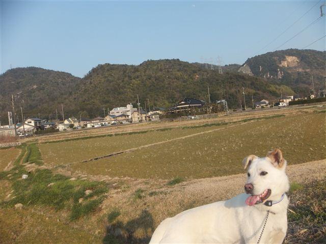 f:id:yasukazu01:20130222163053j:image