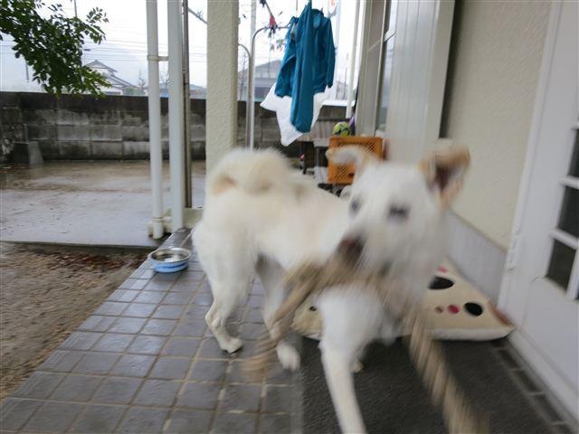f:id:yasukazu01:20130301113044j:image