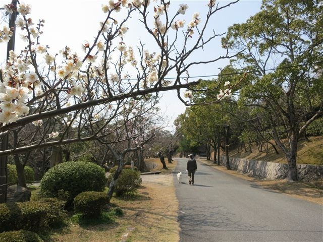 f:id:yasukazu01:20130304133825j:image