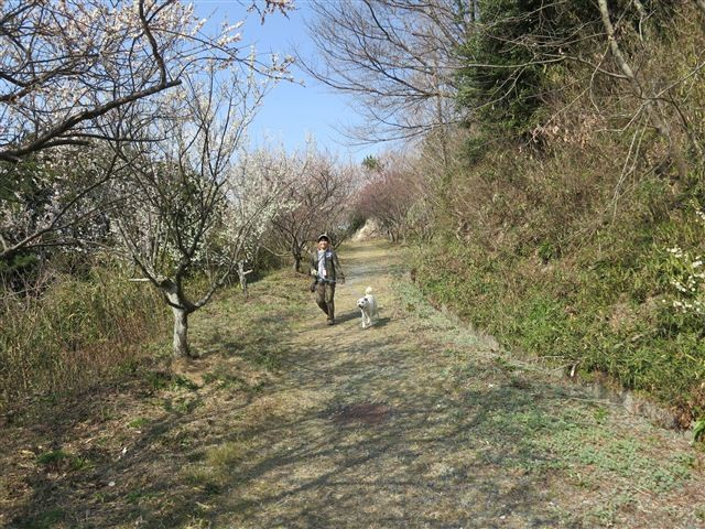 f:id:yasukazu01:20130304135325j:image
