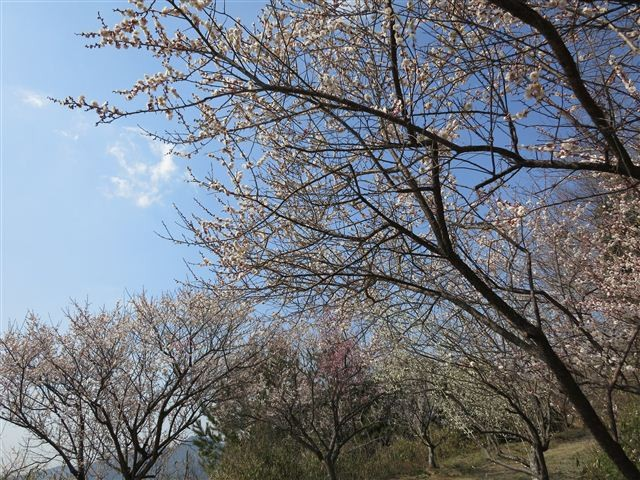 f:id:yasukazu01:20130304135420j:image