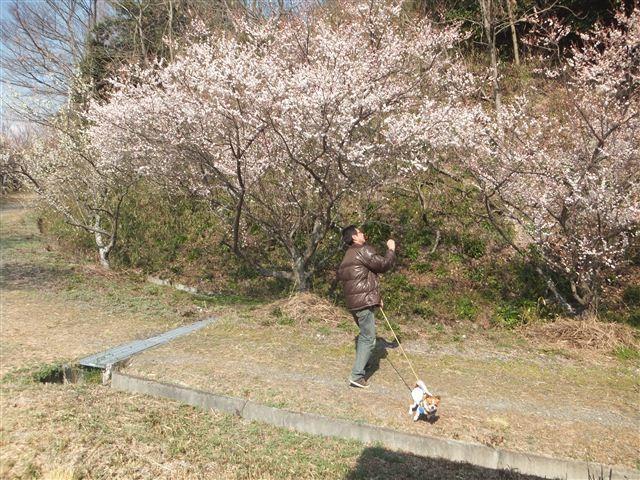 f:id:yasukazu01:20130304135456j:image