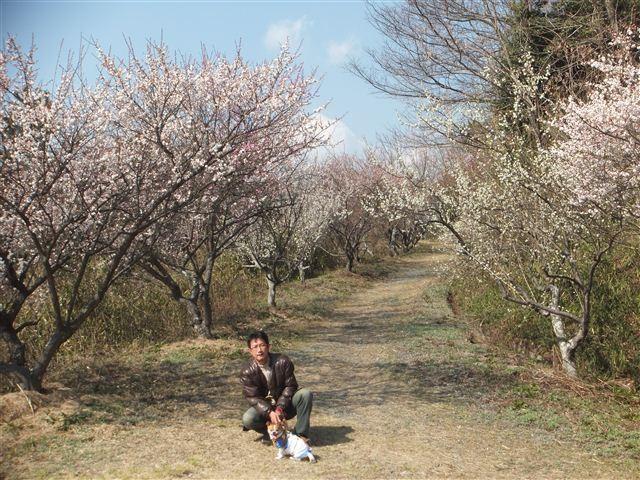 f:id:yasukazu01:20130304135520j:image