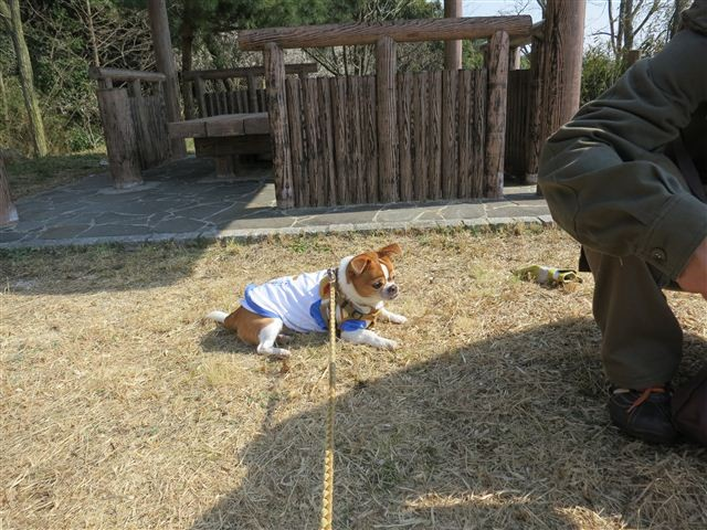 f:id:yasukazu01:20130304135820j:image