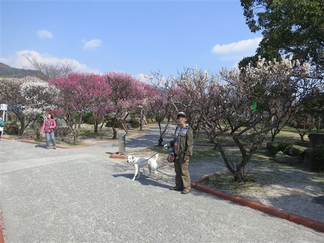 f:id:yasukazu01:20130304141331j:image
