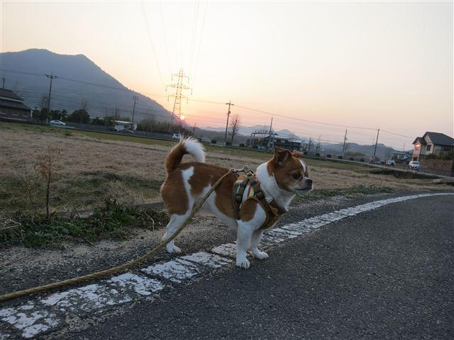 f:id:yasukazu01:20130304175310j:image
