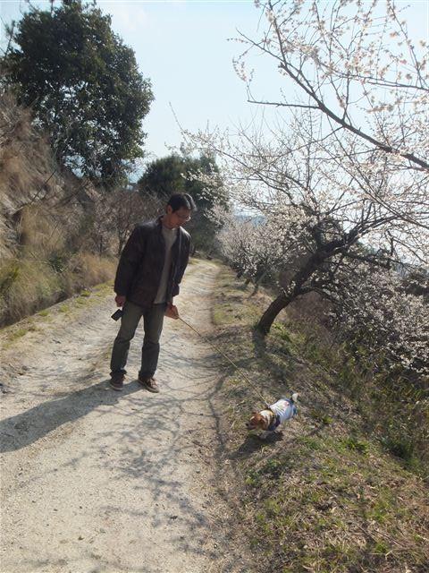 f:id:yasukazu01:20130306222458j:image