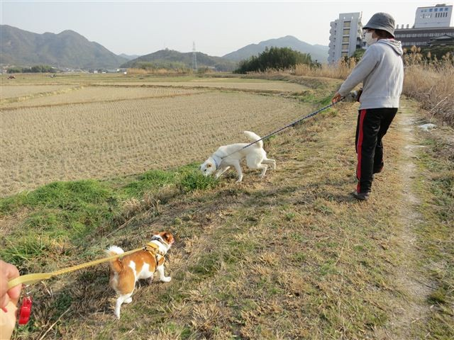 f:id:yasukazu01:20130308155649j:image