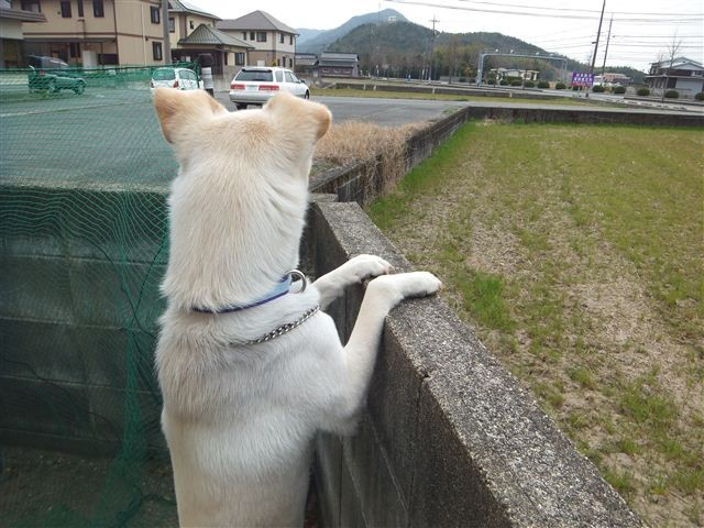 f:id:yasukazu01:20130317125009j:image