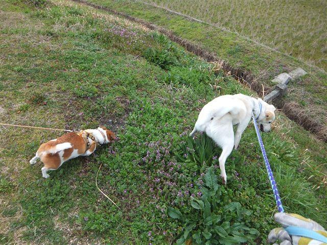 f:id:yasukazu01:20130320154207j:image