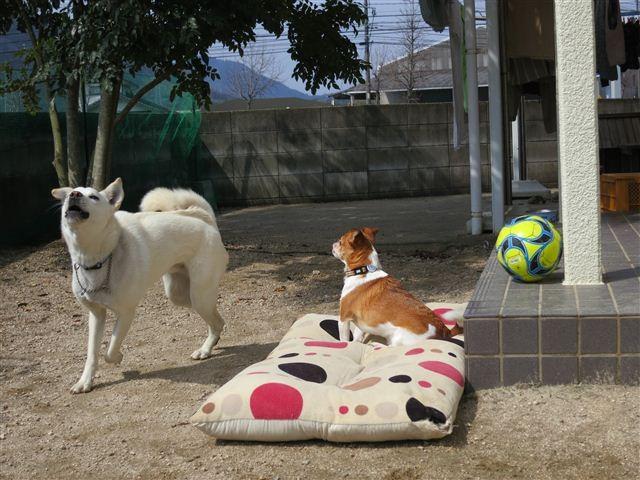 f:id:yasukazu01:20130323103817j:image