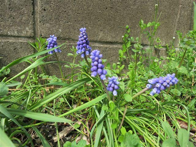 f:id:yasukazu01:20130323104929j:image