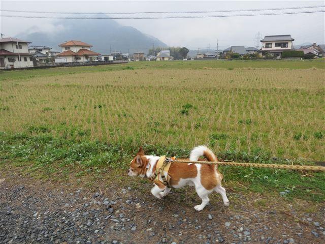 f:id:yasukazu01:20130327155917j:image