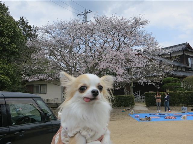 f:id:yasukazu01:20130331124304j:image