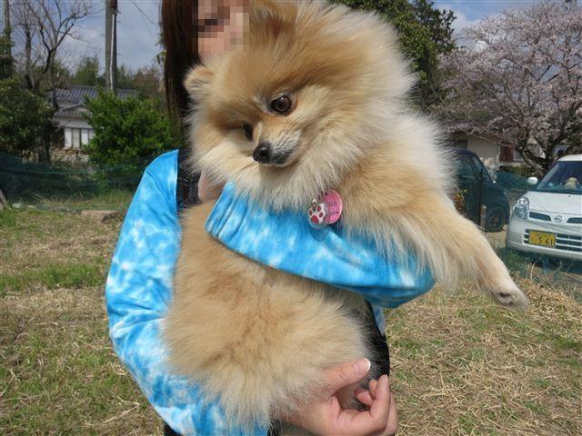 f:id:yasukazu01:20130331140851j:image