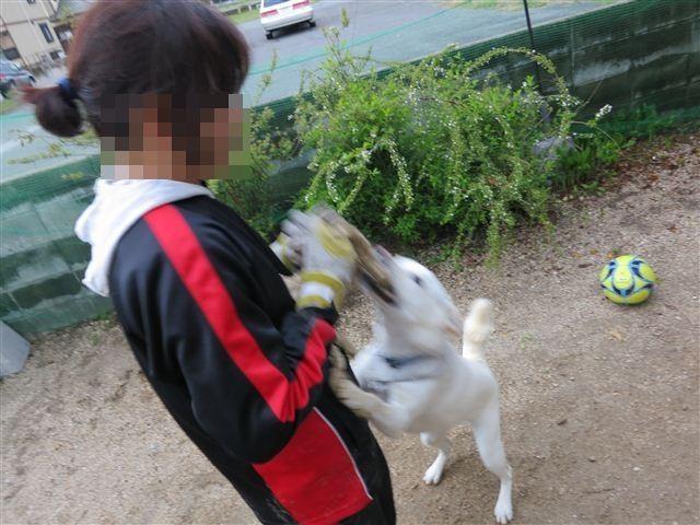 f:id:yasukazu01:20130407180706j:image