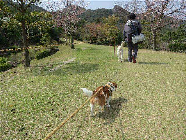 f:id:yasukazu01:20130409135153j:image
