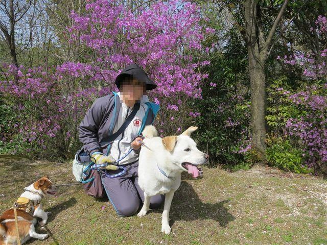 f:id:yasukazu01:20130409141423j:image