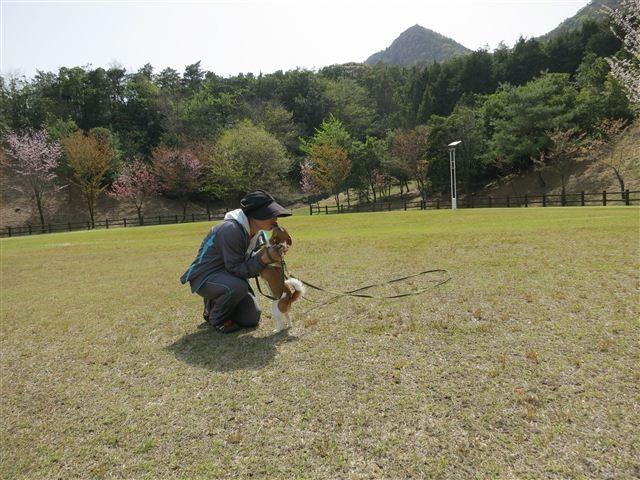 f:id:yasukazu01:20130409142550j:image