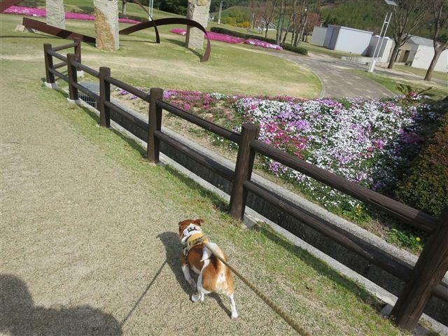 f:id:yasukazu01:20130409143910j:image