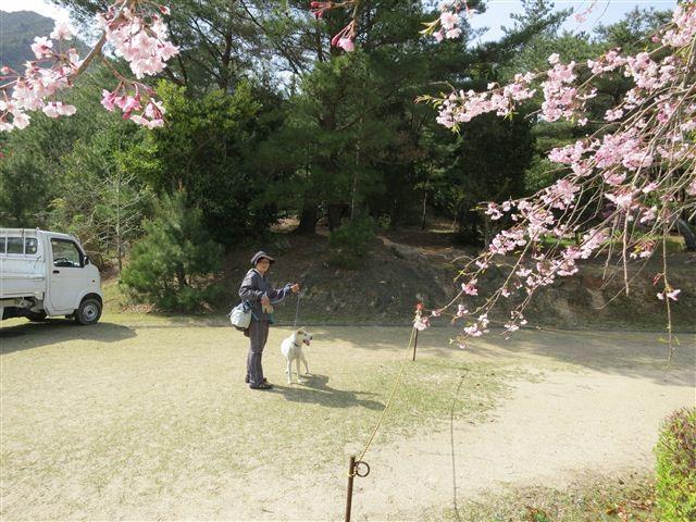 f:id:yasukazu01:20130409144336j:image