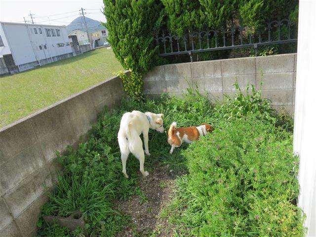 f:id:yasukazu01:20130418151525j:image