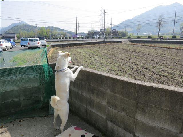 f:id:yasukazu01:20130418152026j:image