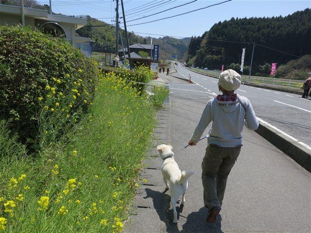 f:id:yasukazu01:20130419115338j:image