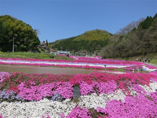 f:id:yasukazu01:20130419115606j:image