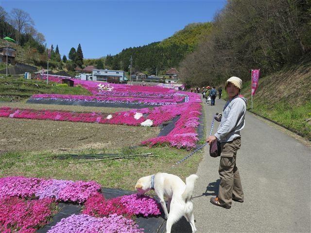 f:id:yasukazu01:20130419115744j:image