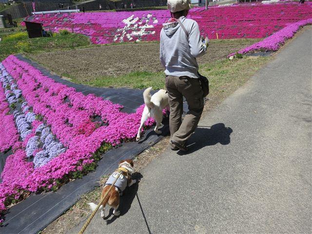 f:id:yasukazu01:20130419115856j:image