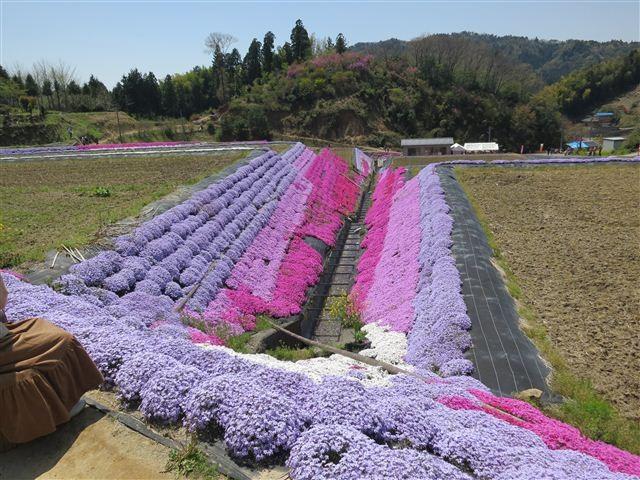 f:id:yasukazu01:20130419120728j:image