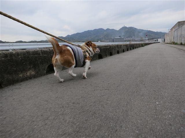 f:id:yasukazu01:20130420102044j:image