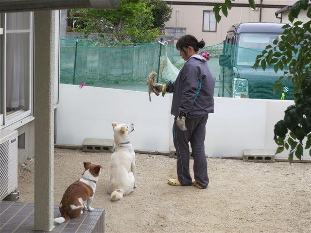 f:id:yasukazu01:20130423115301j:image
